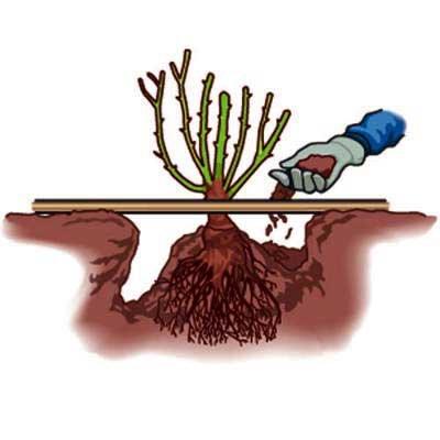 Уход и содержание цветы растения уход