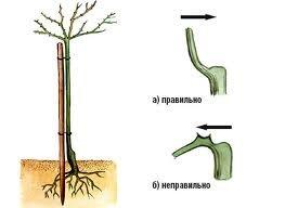 ukrittya 5 Как укрыть розы на зиму эффективно