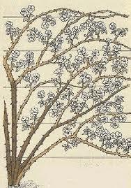 razmeshchenie Плетистые розы уход, посадка саженцев, обрезка, выращивание
