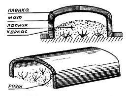 ukrittya 67 Укрытие роз на зиму воздушно сухим способом
