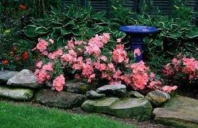 pochvopokrovnaia rosa 2 Почвопокровные розы фото, посадка и уход, сорта